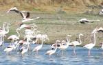 Monitorização de avifauna