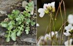 monitorização flora