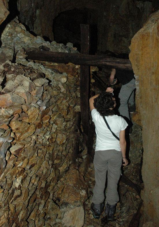 prospeccao de abrigos de morcegos quiropteros NOCTULA