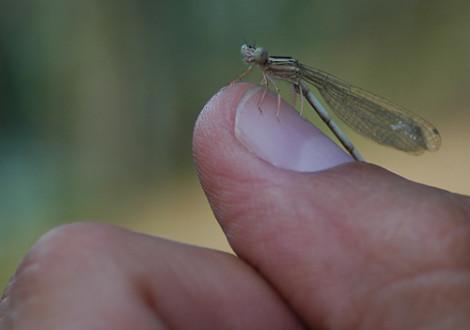 inseto monitorização Invertebrados