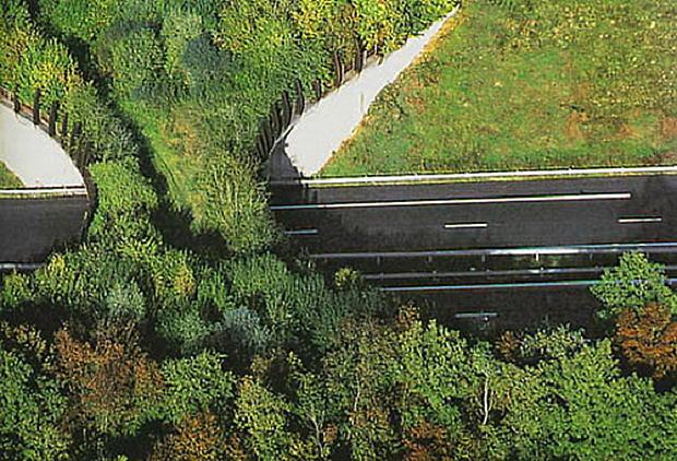 Passagem para fauna em autoestradas