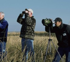 especialista avifauna birdwatching