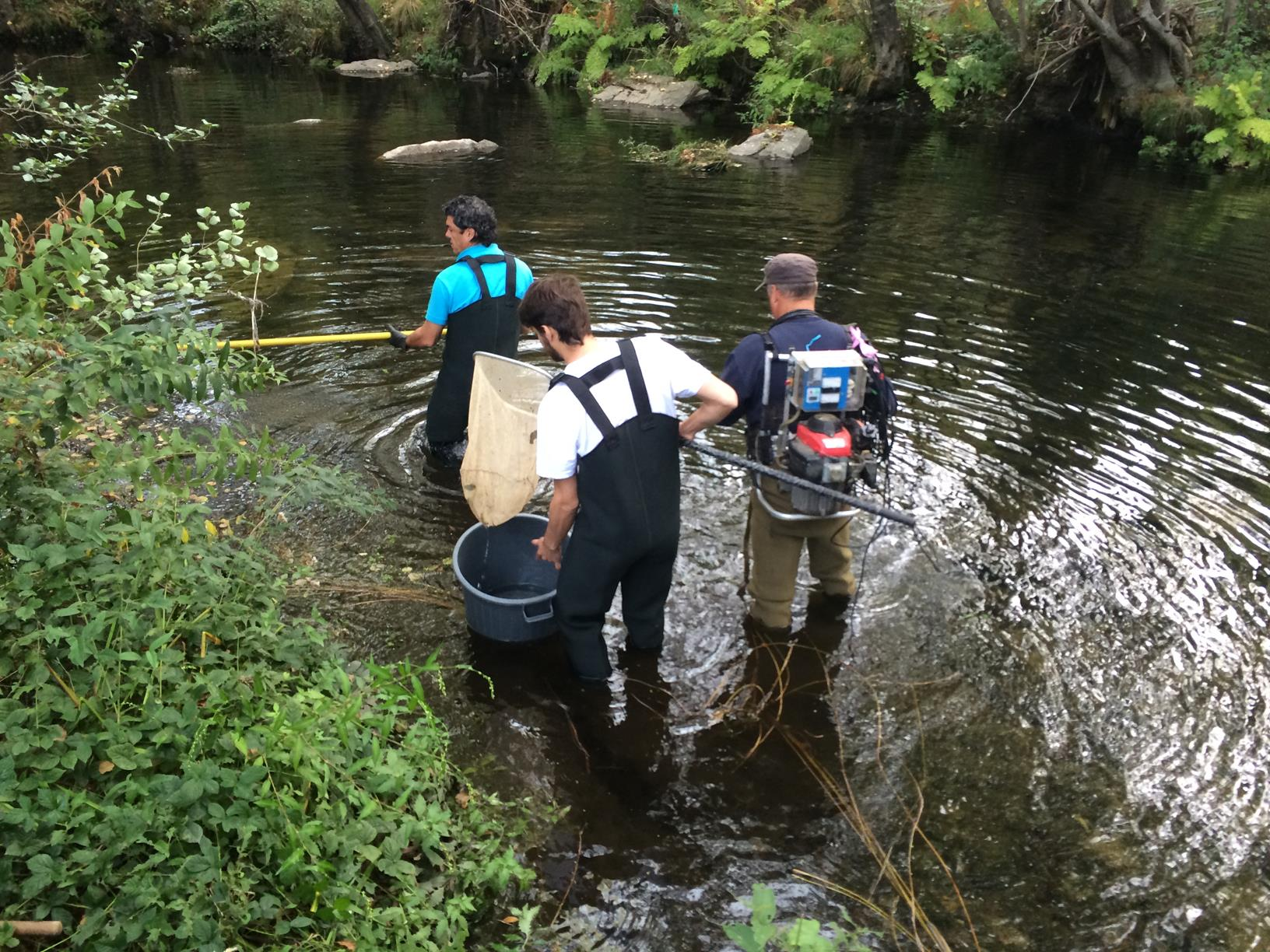 captura de peixes pesca eletrica