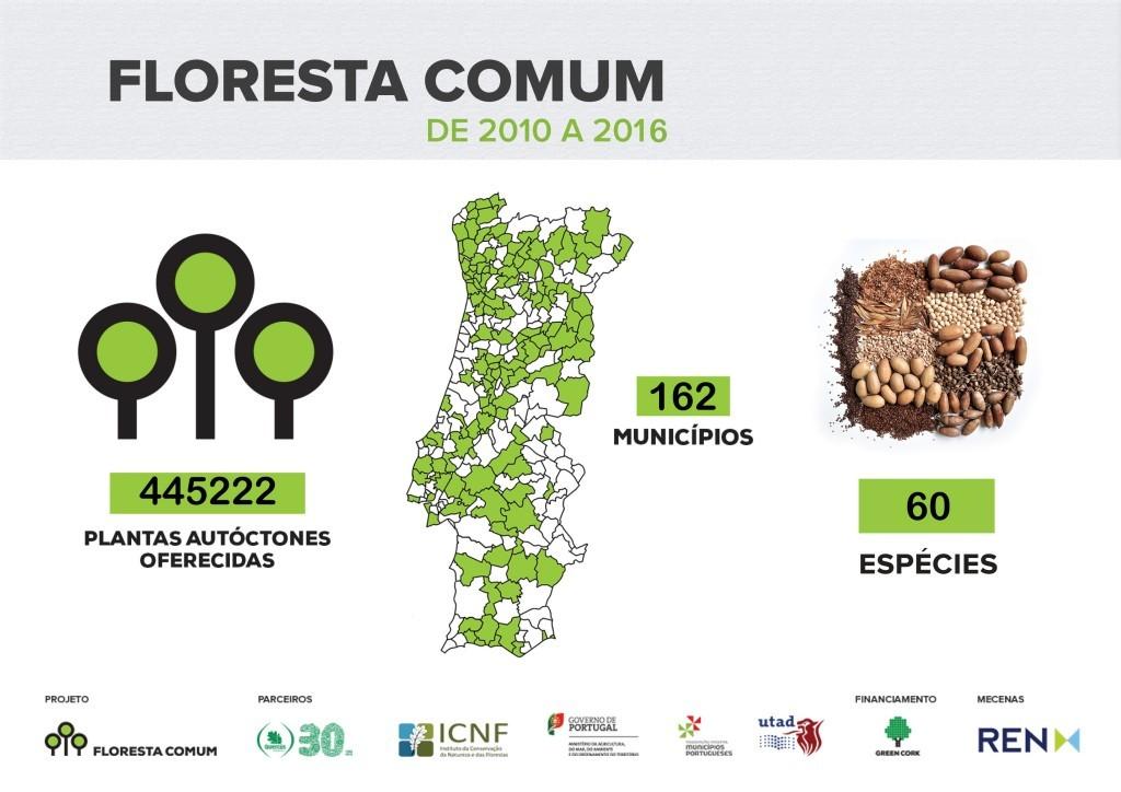 Floresta Comum