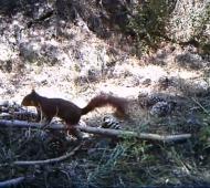 esquilo monitorização câmara video